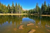 красивое озеро и ели, в josemite — Стоковое фото
