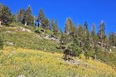 Grassy hillside — Stock Photo
