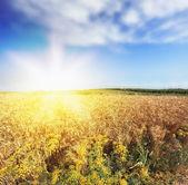 яркие лучи солнечного света — Стоковое фото