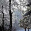 Snow-covered glade in winter forest — Stock Photo