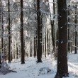 A sunny Christmas Day. Snow winter forest - Stock Photo