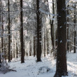 A sunny Christmas Day. Snow winter forest — Stock Photo