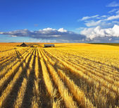 Huge fields of Montana after a harvest — Stock Photo