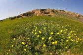 春の砂漠で. — ストック写真