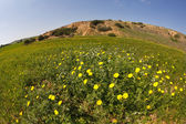 Frühling in der wüste. — Stockfoto