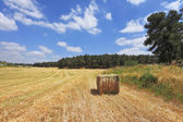 A field on a wood edge. — Stock Photo
