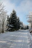 Zimní cesta na dřevo — Stock fotografie