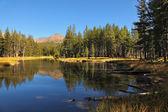 Montanhas e floresta — Foto Stock