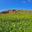 Blossoming spring plain-grass, camomiles and hills - Foto Stock