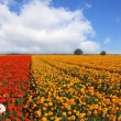 "The flowers, photographed by an lens ""Fish eye"" - Foto Stock"