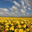The yellow and red buttercups - Foto Stock