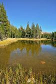 Vackra sjön och päls-träd, i park josemite — Stockfoto