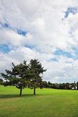 Une pente herbeuse dans jardin sigurta — Photo