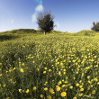 Blossoming field with camomiles and bush — Stock Photo #18303897