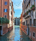 The Venice. In the sky - flock of migratory birds — Stock Photo