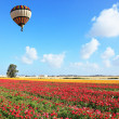 Bright striped balloon flies over a field — Stock Photo