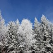 Stock Photo: Winter in forest.