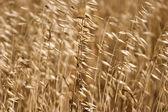 The dried up grass — Fotografia Stock