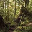Well-known  Rainforest on island Vancouver — Stock Photo