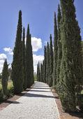 Amazing avenue of cypresses — Stock Photo