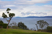 Tree on coast of strait — Stock Photo