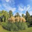 High decorative flower bed of reeds — Photo