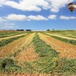 Bright balloon over a field of wheat — Stock Photo #19645863