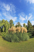 High decorative flower bed of reeds — Stock Photo