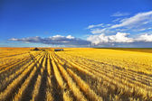Huge fields after a harvest — Stock Photo