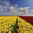 Stock Photo: Multi-coloured field flowers buttercups