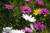 Las flores del campo — Foto de Stock