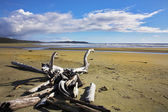 Huge sandy ocean beach on island Vancouver — Stock Photo