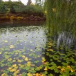 Stock Photo: Silent pond with autumn yellow leaves