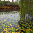 Silent pond with autumn yellow leaves — Stock Photo