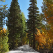 Nice trail in the mountain park — Stock Photo #23307266