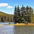 A tiny island in a shallow lake overgrown with pine trees — Stock Photo