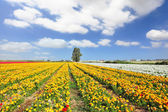 The magnificent buttercups — Stock Photo