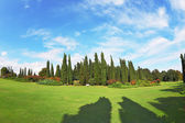 The shadows of the cypresses — Stock Photo