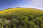 Green blossoming field with camomiles — Stock Photo