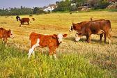 The pasture — Stock Photo
