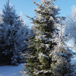 Snow glade in winter forest — Stock Photo