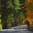 Stock Photo: Road to an autumn wood