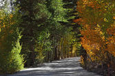 Road to an autumn wood — Stock Photo
