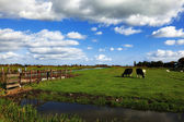 The channel and cows in autumn day — Stock Photo