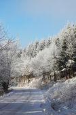 Winter road — 图库照片