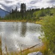 Picturesque bog — Stock Photo #25038903