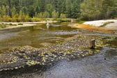 The shoaled river. — Stock Photo