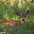 Deer in park — Stock Photo #25045263
