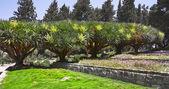 Nádherná zahrada — Stock fotografie