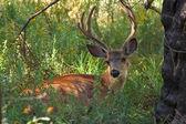 Deer in park — Stock Photo